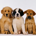 puppy and dog classes surrey